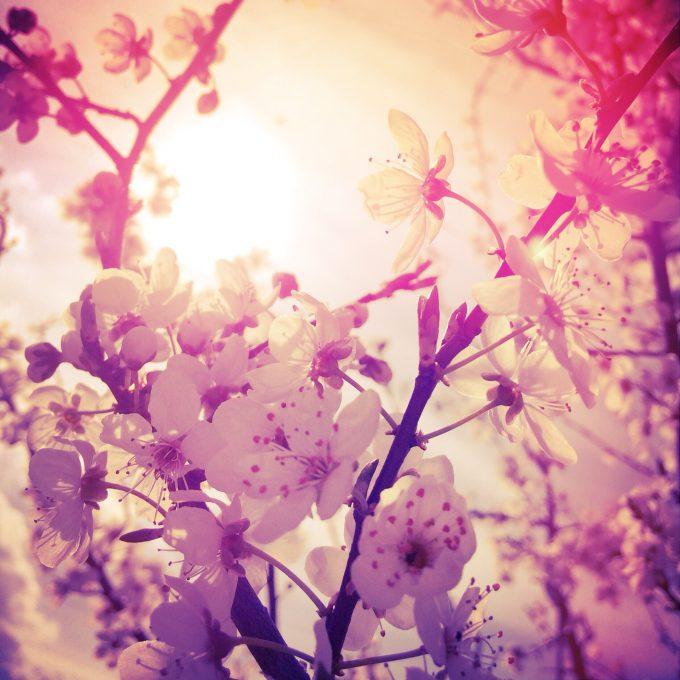 Jarní momentka květů v žáru odpoledního slunce